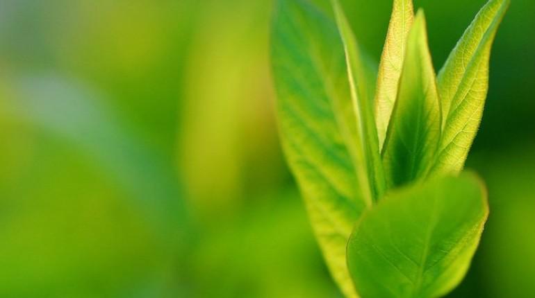 Bogastvo travnika v drevesih in grmih