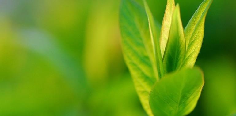Navdih grma: Duhovno čiščenje