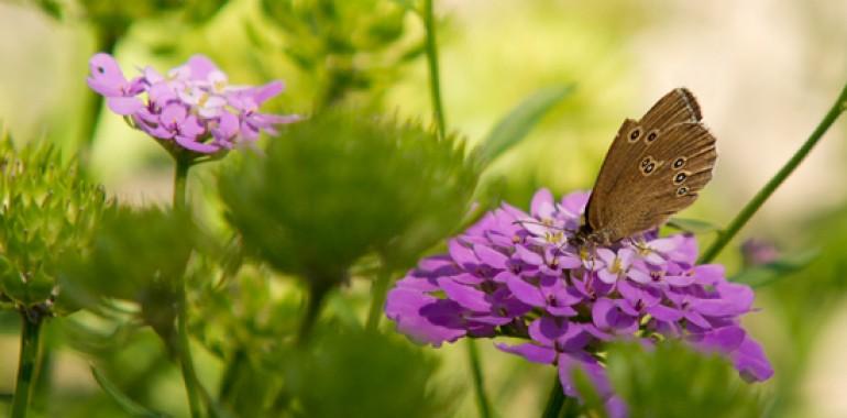 Zgodba o metulju