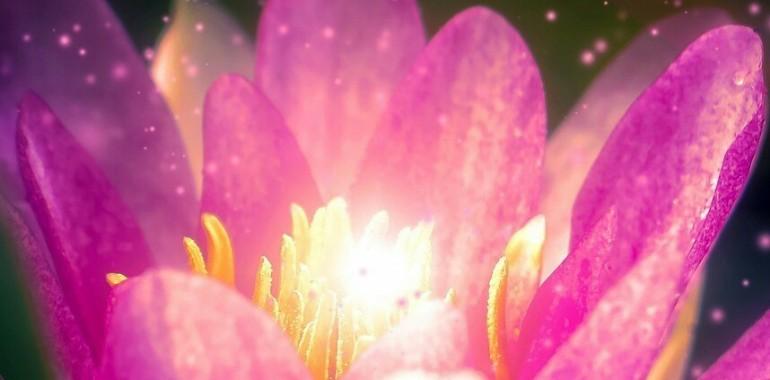 Spletna vodena meditacija - Z visoko vibracijo do ljubezni