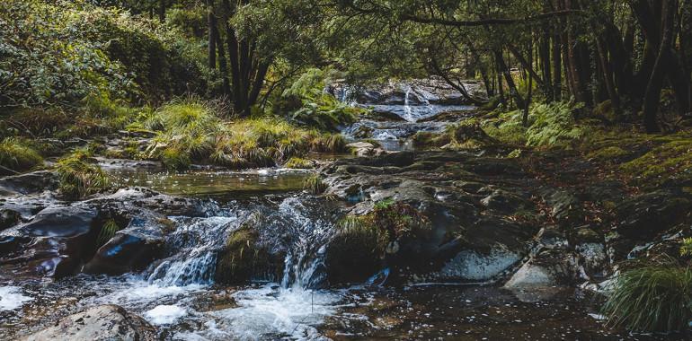 Kratka meditacija: prizemljitev in polnjenje z energijo