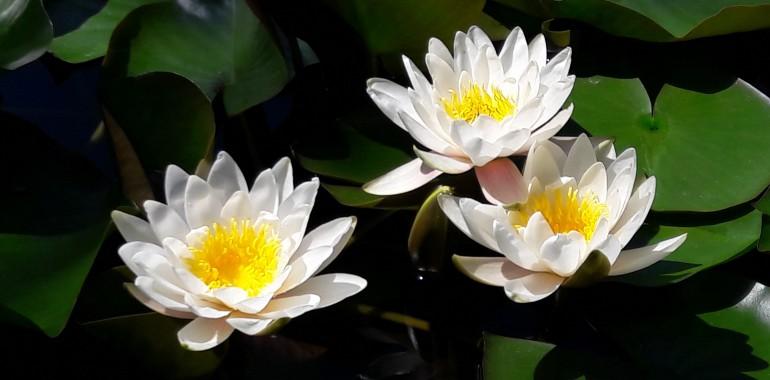 Avatara, središče za naravno, srčno in zavestno bivanje