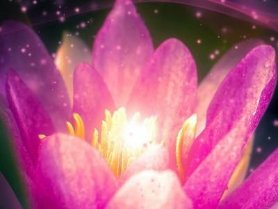 Spletna vodena meditacija - Postanite obilje