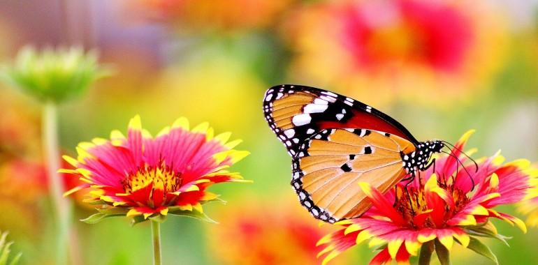 10 prepričanj, ki blokirajo veselje in srečo!