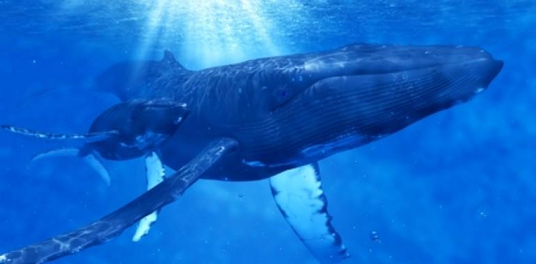 Živalski vodnik - kit