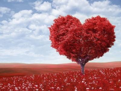 Zdravljenje srca z odpuščanjem - izjemen samozdravilni proces