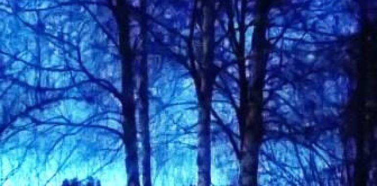Drevesa: njihova moč