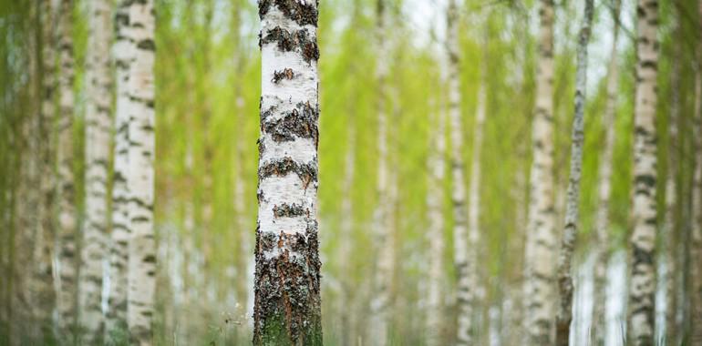 Uvid Gozdnega Moža: Se samo informiraš ali tudi živiš?