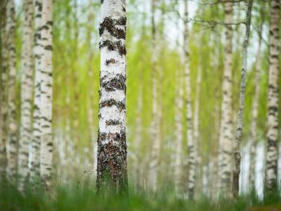 Uvidi Gozdnega Moža