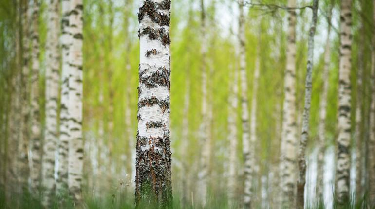 Uvid Gozdnega Moža: Gozd čaka. Povabite se vanj.