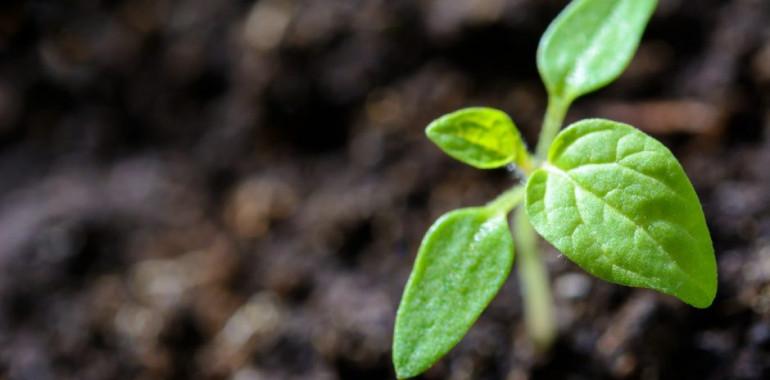 Osebna rast ima dve sestavini …