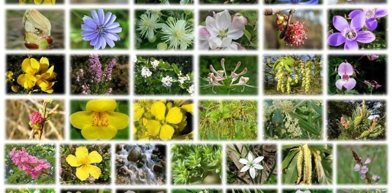 Sporočila cvetnih esenc: NEDOTIKA - Cvet časa