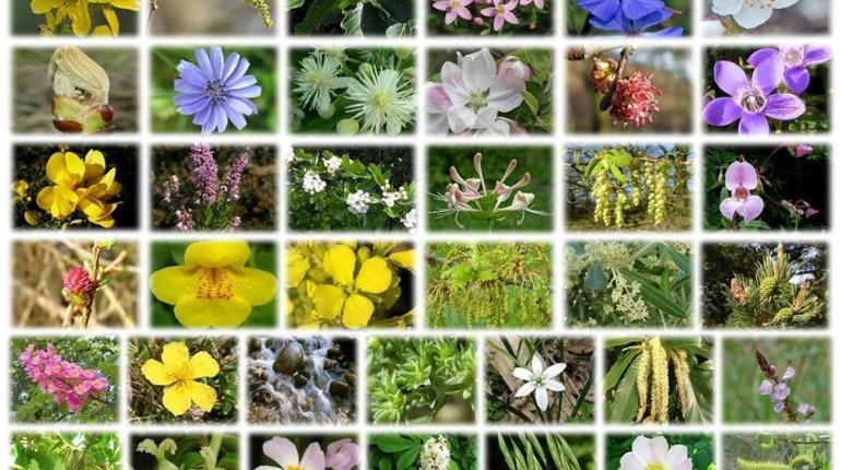 Sporočila cvetnih esenc