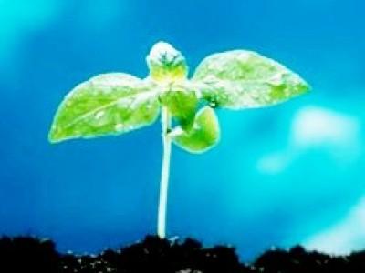 Kako do trdnega zdravja po naravni poti s pomočjo energije
