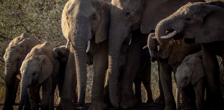 Ponosni sloni (18-23 let)