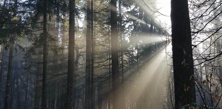 Leto 2018, leto iluminacije, leto svetlobe