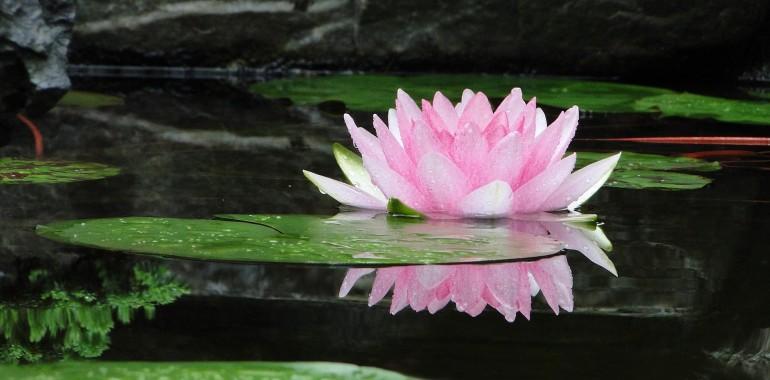 Ljudje smo kot lotos