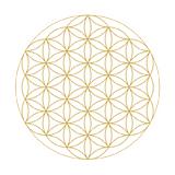 Infinity Alignment, terapije, delavnice, svetovanje