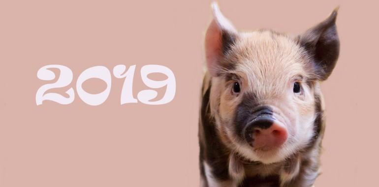 2019 – kitajsko leto prašiča: leto sreče in obilja!