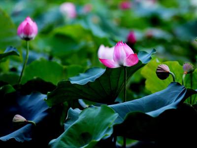 Samozdravljenje: ozdravimo sebe, da lahko ozdravimo svet