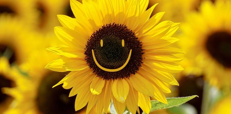 Smeh na vseh poteh, smejalne vadbe po metodi Joga smeha, meditacije