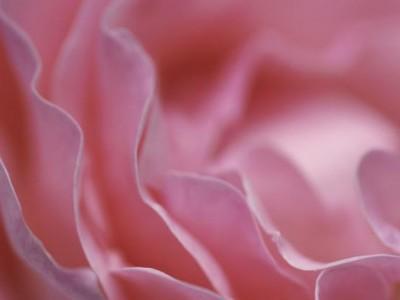 Spletni program za prebujanje ženstvenosti: Odpri svoj cvet