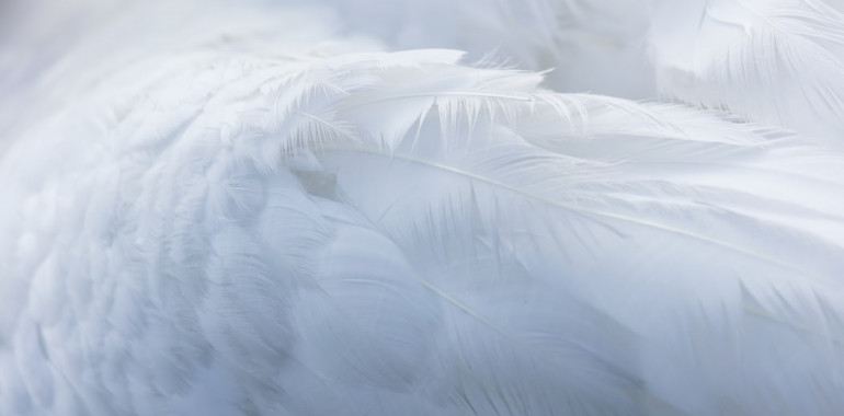 Kako prosite angele, da vam pomagajo?