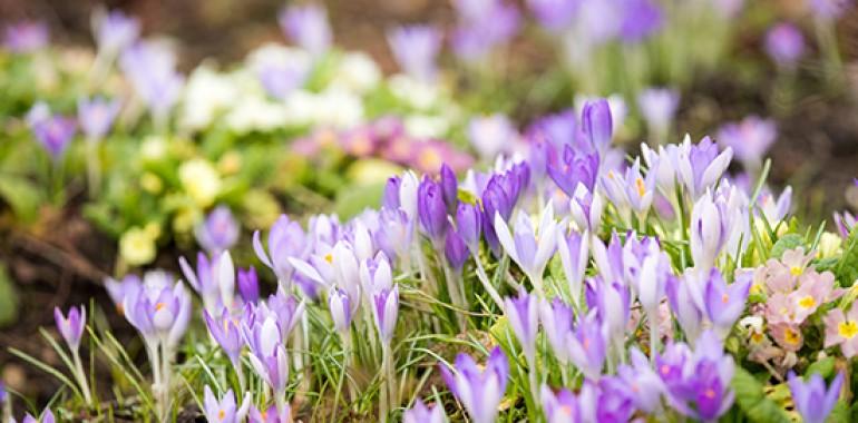 Vastu pomladi