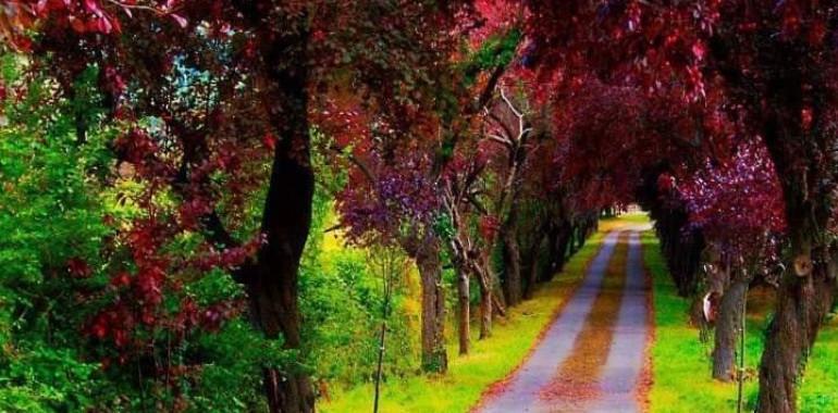 Kam me pelje pot po kateri hodim?