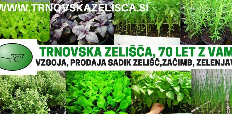 Trnovska zelišča, vzgoja in prodaja zelišč